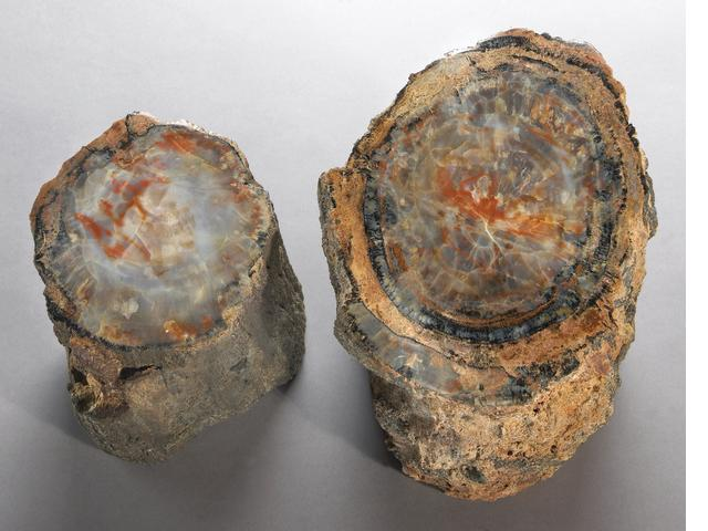 PAIR OF SMALL POLISHED LOGS.