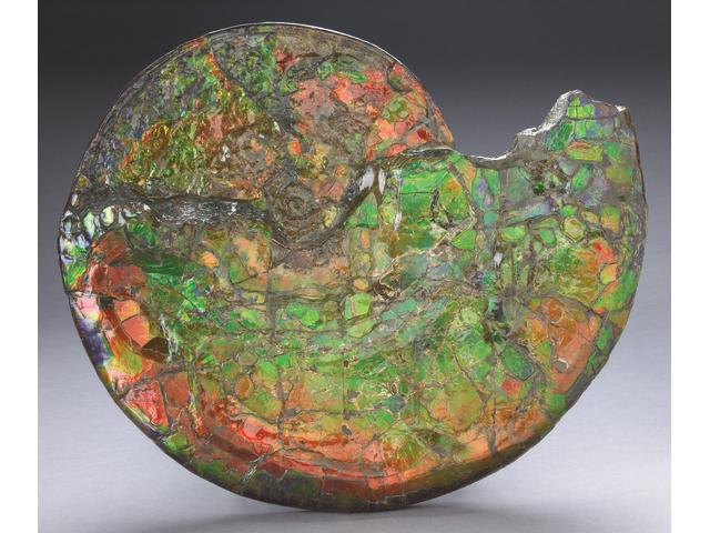 CANADIAN AMMONITE (GREEN HUES), WITH STAND.