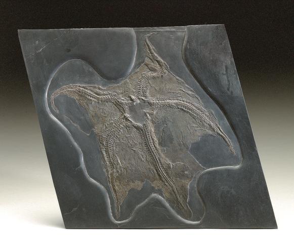 Bundenbach Starfish