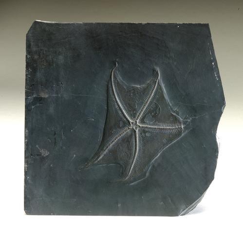 Devonian Starfish