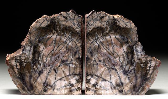 P{etrified Wood Bookends (Araucarioxylon arizonicum)