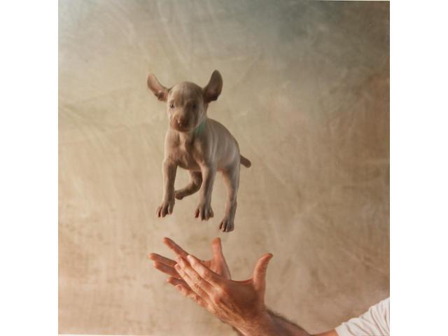 William Wegman (American b. 1943) Puppies, 1989 11 x 14in (28 x 35½cm)
