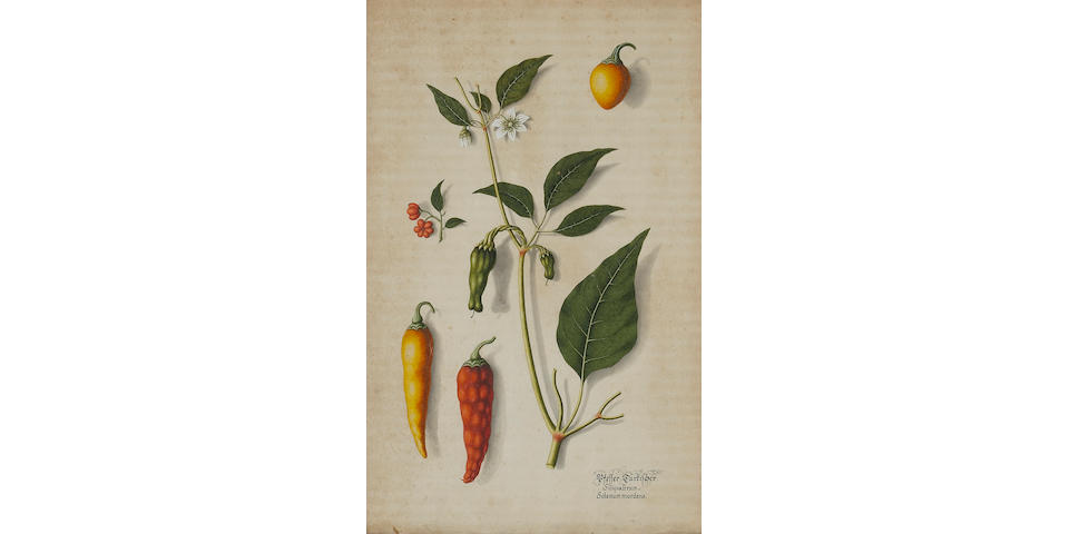 German School (18th century) A set of botanical illustrations depicting peppers, apples, each 14 1/2 x 9 1/2in (36.8 x 24.1cm)