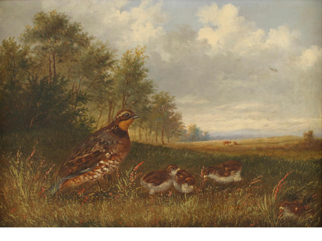 Howard L. Hill (d. 1870) Quails 14 x 20in (35.6 x 50.8cm)