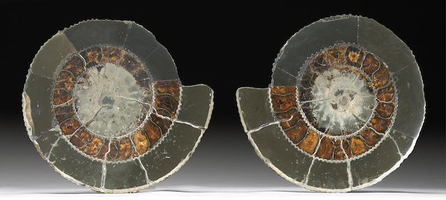Pair of Cut Ammonites