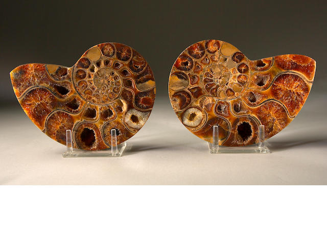 Pair of Ammonite Halves
