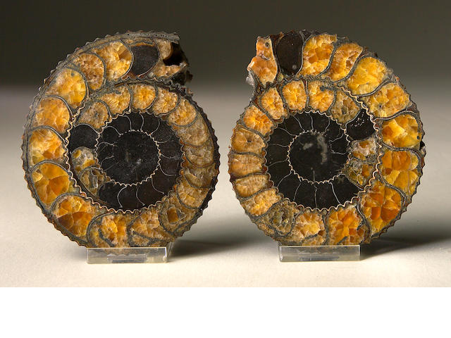 Small cut pair of Madagscar Ammonites