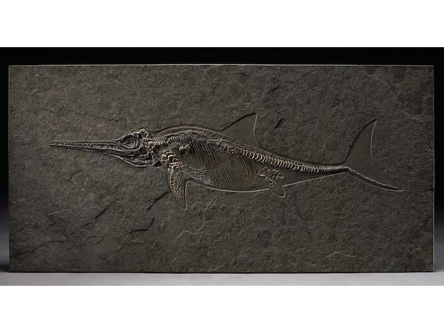 Jurassic Ichthyosaur