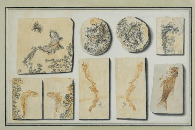 Continental School (19th Century)  Studies of Fossils and Shells: five each 9 x 14 5/16in (22.5 x 36.5cm)