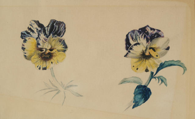 Continental School (19th century) Botanical Study of Two Pansies 7 x 9 1/2in (17.8 x 24.2cm)