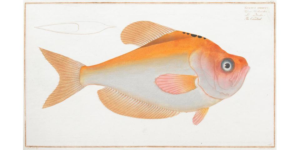 BLOCH, MARCUS ELIESER.  1723-1799.