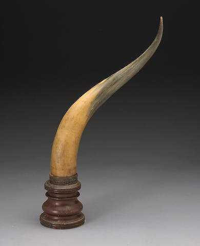 A large decorative horn trophy