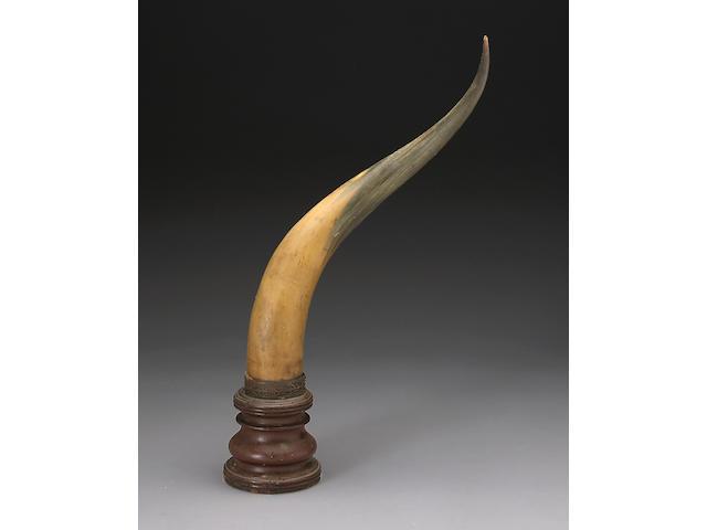 A large decorative horn trophy