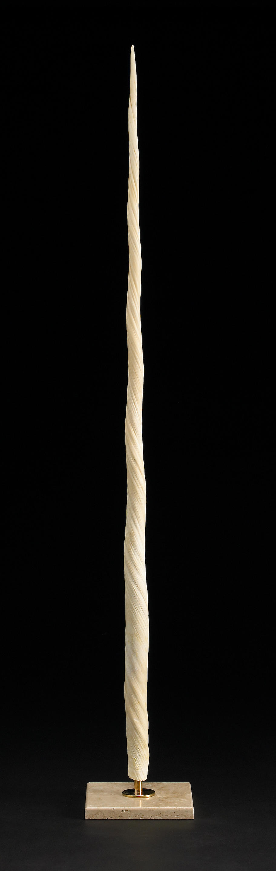 Rare Narwhal Tusk - LotSearch de