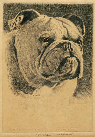 Morgan Dennis (American, 1892 - 1960) Bulldog sight 5 x 3 1/2 in. (12.7 x 8.8 cm.)