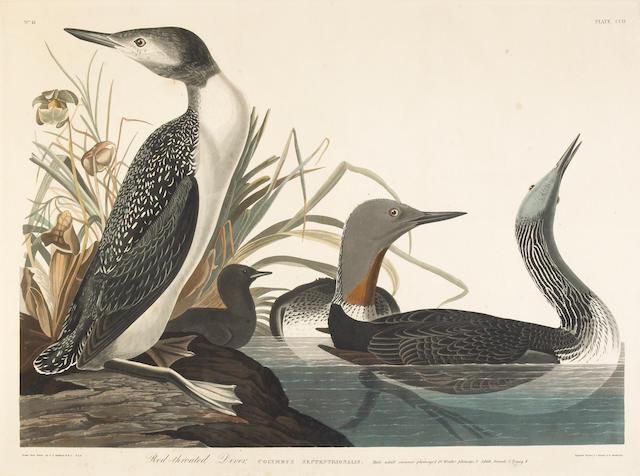 After John James Audubon; Red-throated Diver (Pl. CCII);