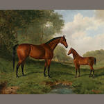 Frederick Albert Clark (19th/20th Century)Filly and Foal 22 x 28in (55.9 x 71.1cm)