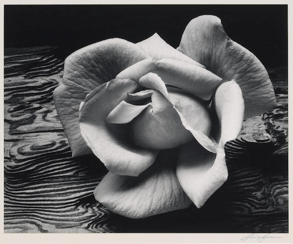 Ansel Adams Rose and Driftwood, San Francisco;