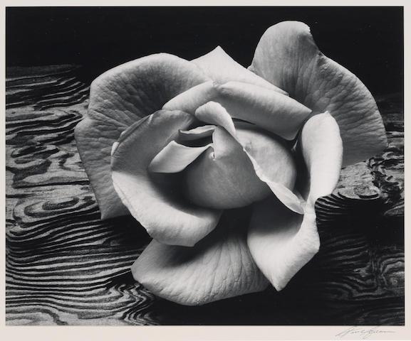 Ansel Adams Rose and Driftwood, San Francisco;