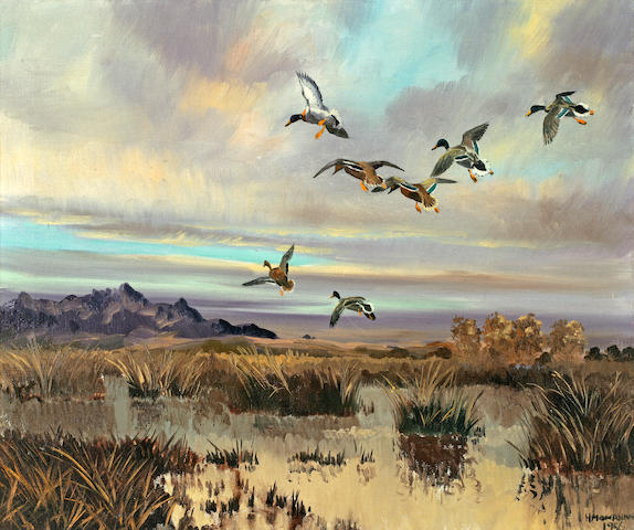 Hugh Monahan (Irish, 1914-1970) Mallards Landing in a Marsh 20 x 23 3/4in (50.8 x 60.3cm)