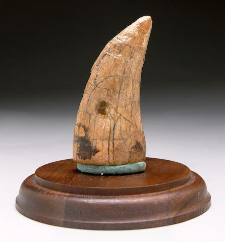 T. Rex Tooth