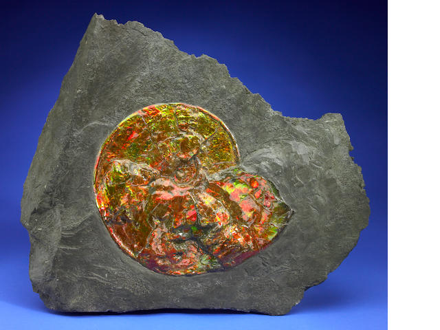 Opalescent Ammonite in Matrix