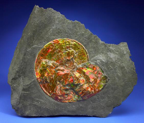 Opalescent Ammonite in Matrix