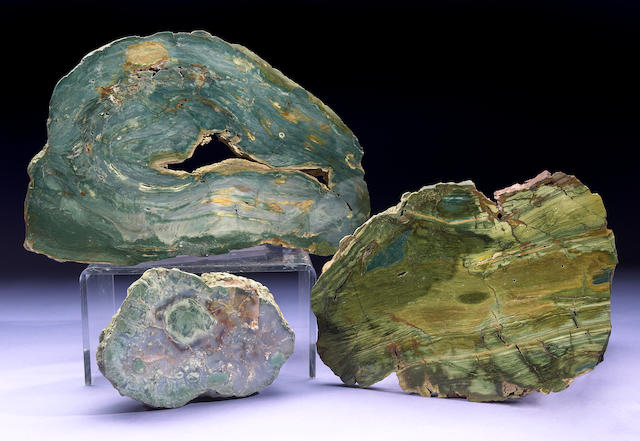 Three Petrified Swamp Bog Specimens
