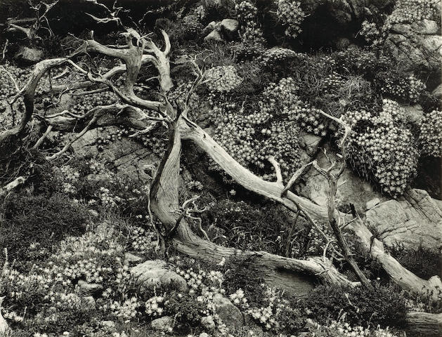 Brett Weston, Cypress Forest, Carmel, 1951; Rock Forms, Pebble Beach, 1974;