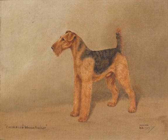 L.W. Lucas (British, 20th Century) Champion Wrose Anchor, a prize Airedale 30.5 x 35.5 cm. (12 x 14