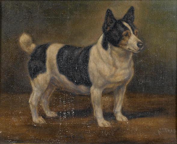 Edward  Aistrop (British, active 1880-1920) Bessie, a Corgi 10 1/4 x 10 1/4 in. (20 x 26 cm.)