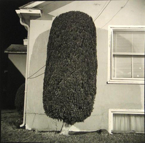 Steve Fitch (American, born 1949); Night Bushes, Pendleton, Oregon; (4)