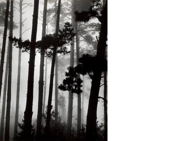 Brett Weston (American, 1911-1993); Monterey Pine and Fog, California;