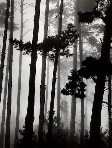 Brett Weston (American, 1911-1993); Monterey Pine and Fog, California;