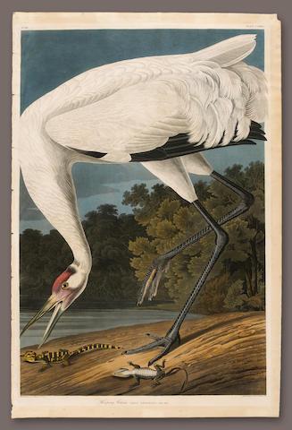 After John James Audubon (American, 1785-1851); Hooping Crane;
