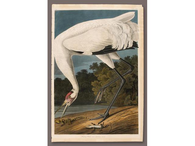 After John James Audubon (American, 1785-1851); Hooping Crane. Grus Americana. Adult Male (Pl. CCXXVI);