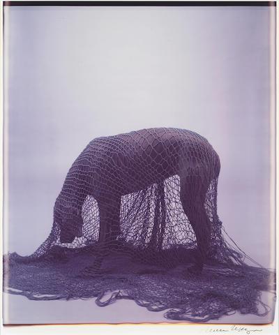 William Wegman (American, born 1943); Netted;