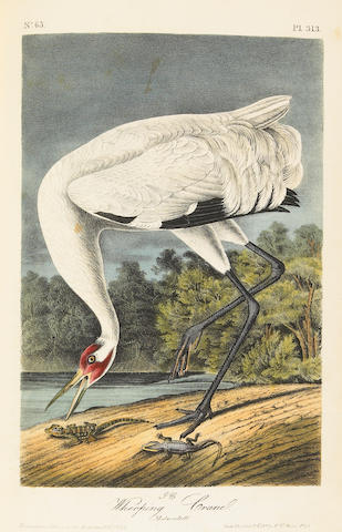 AUDUBON, JOHN JAMES. Birds of America. 7 vols.