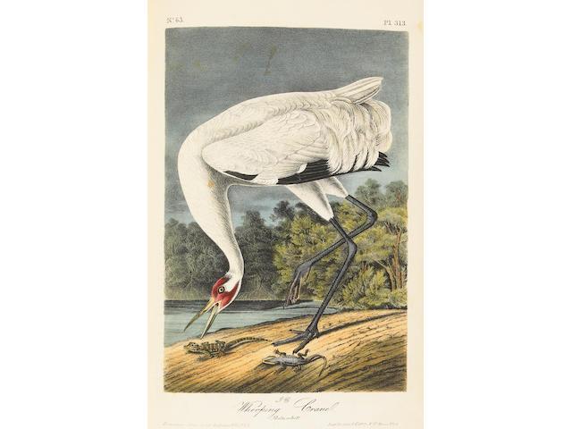 AUDUBON, JOHN JAMES.  1785-1851.