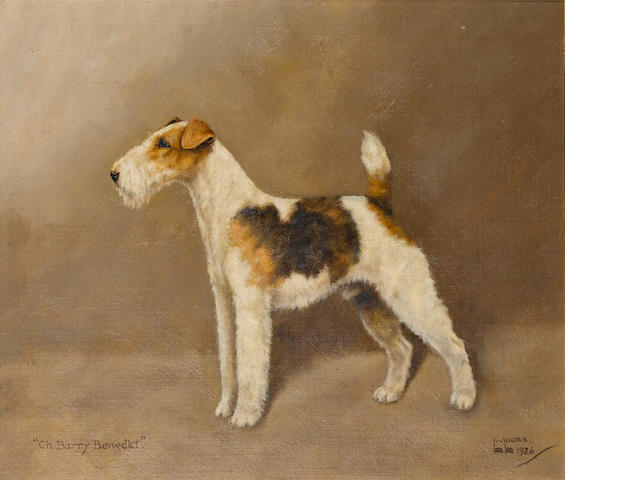 William Lucas Lucas (British, 20th century) Portrait of the champion Airedales 'Crackley Supreme' an
