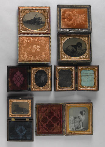 Group of six cased daguerreotypes of dogs<br/>19th century