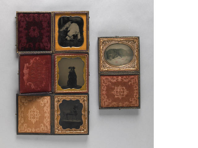 Group of four cased ambrotypes of dogs<br/>19th century