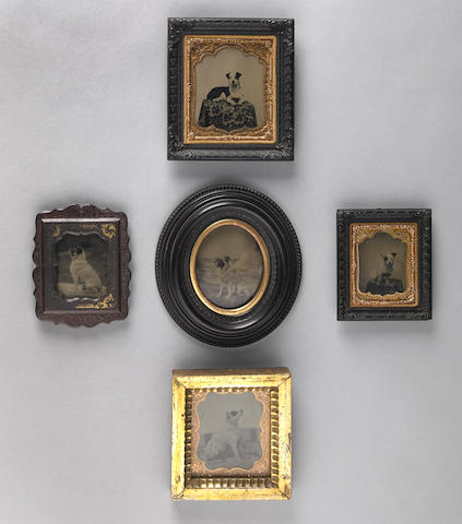 Group of five framed tintypes of dogs, 19th century