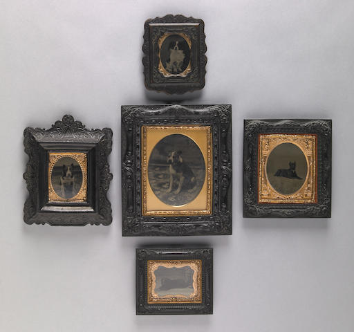 Group of five framed tintypes of dogs<br/>19th century