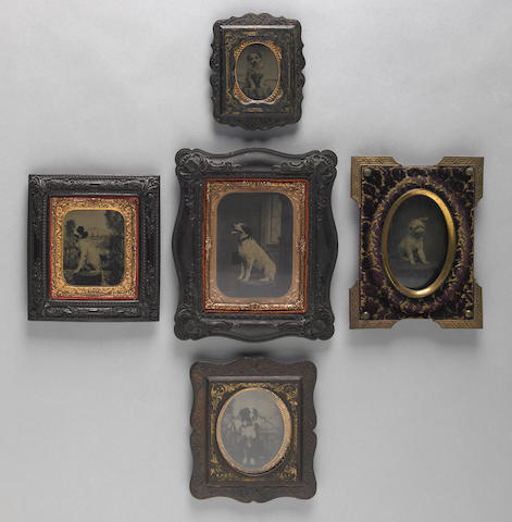 Group of five framed tintypes of dogs 19th century