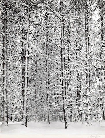 Ansel Adams (American, 1902-1984); Trees and Snow;