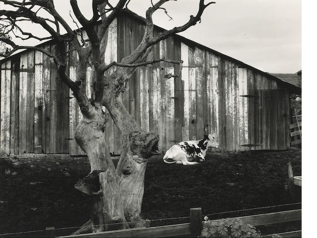 Edward Weston (American, 1886-1958); Corral, Pismo Beach, California;