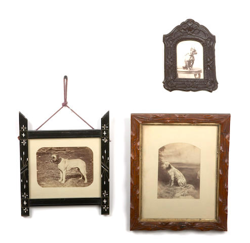 A collection of seven framed photographs of non-sporting dogs
