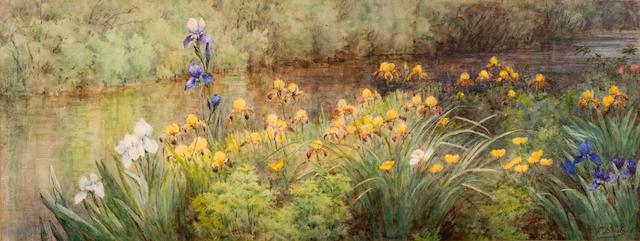 Fidelia Bridges (American, 1834-1924) Irises Along the River 9 1/2 x 24 3/4in