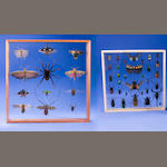 Two Exotic Insect Collections, and one Lobster Specimen (3)